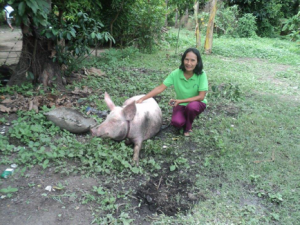 Batang Mantinik promotes pig business to fight poverty