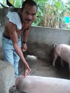 Batang Matinik promotes pig business